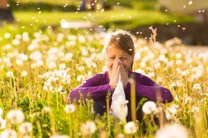 קדחת השחת טיפול טבעי: אלרגיות אביב והטיפול הטבעי בהן – Hay Fever